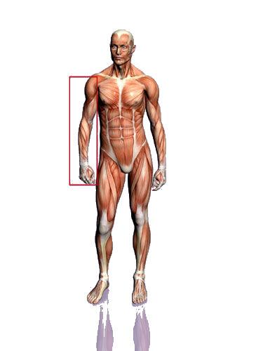 armspieroefeningen arsmpieren trainen